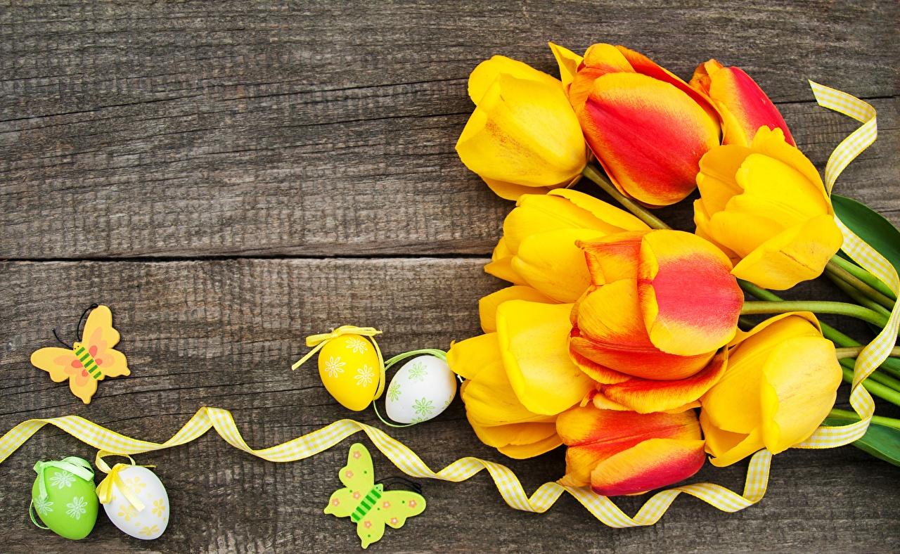 Foto Ostern Ei Tulpen Blumen Bretter eier Blüte