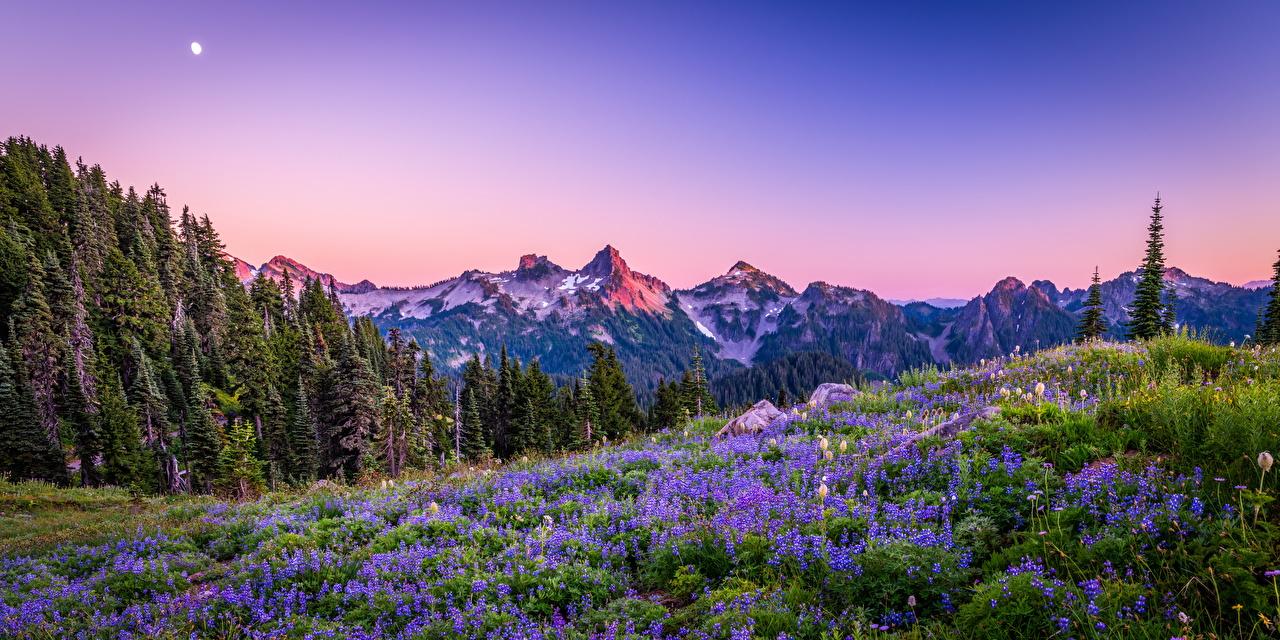 EUA Parque Montanhas Panorama Fotografia de paisagem Mount Rainier National Park, wildflower árvores montanha, parques, Estados Unidos, panorâmica Naturaleza