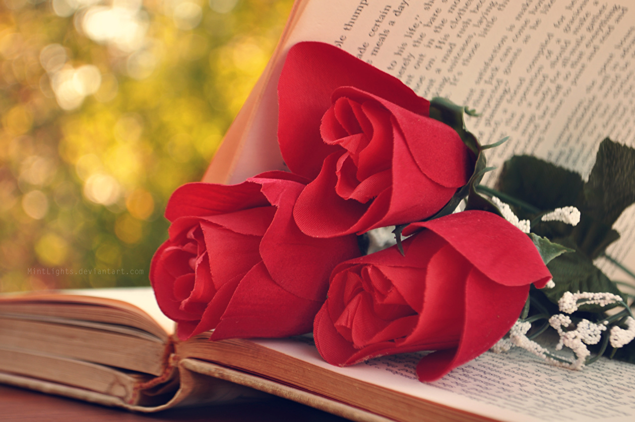 Photos pages Red Roses flower Book Closeup Page rose Flowers books