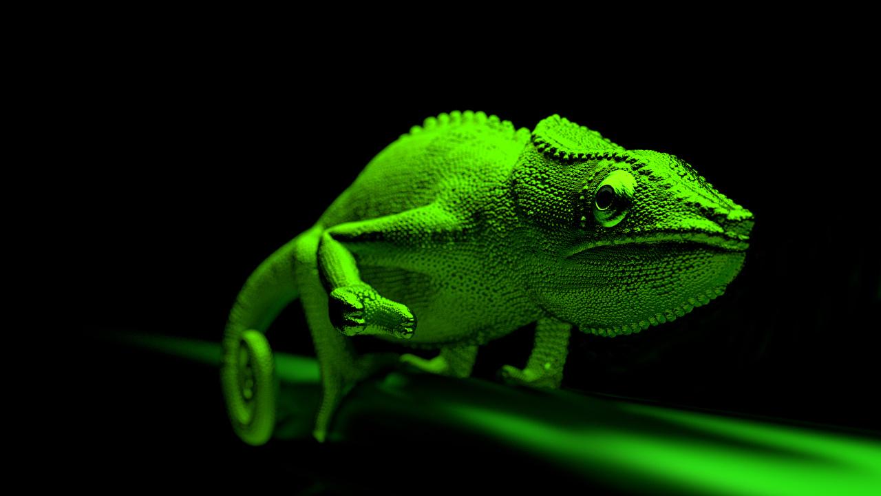 壁紙 カメレオン科 緑 動物 ダウンロード 写真