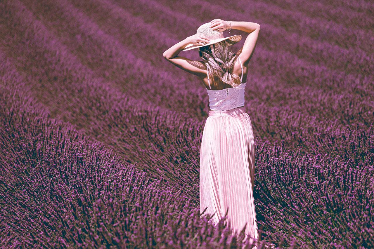 Fotos Blond Mädchen Der Hut junge frau Felder Lavendel Hand Blondine Mädchens junge Frauen Acker