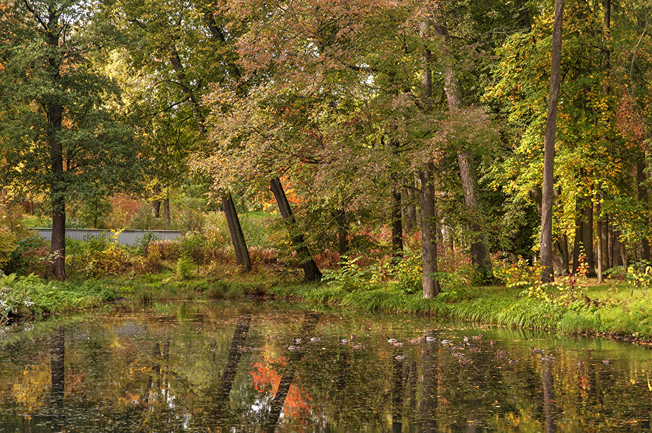 Sfondi San Pietroburgo Russia Peterhof Natura Autunno parchi Alberi Parco