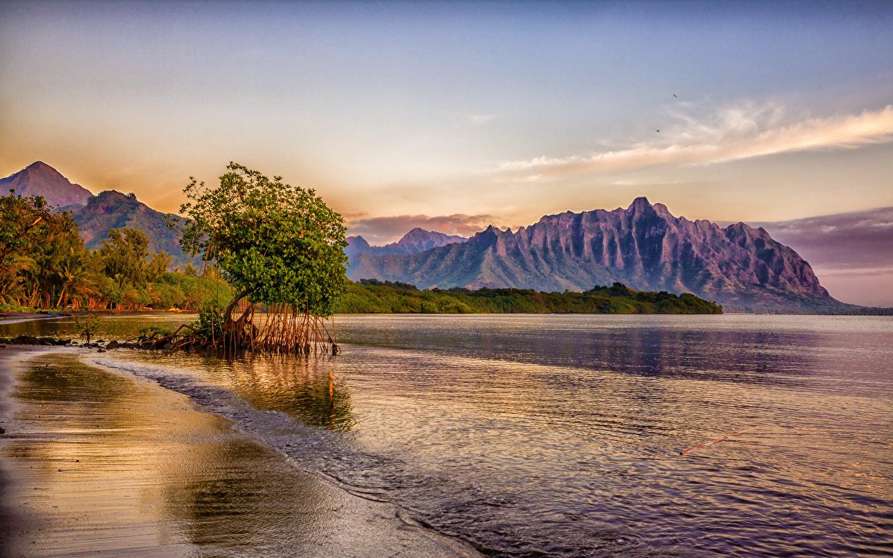 壁紙 熱帯 海岸 山 アメリカ合衆国 ハワイ州 木 自然