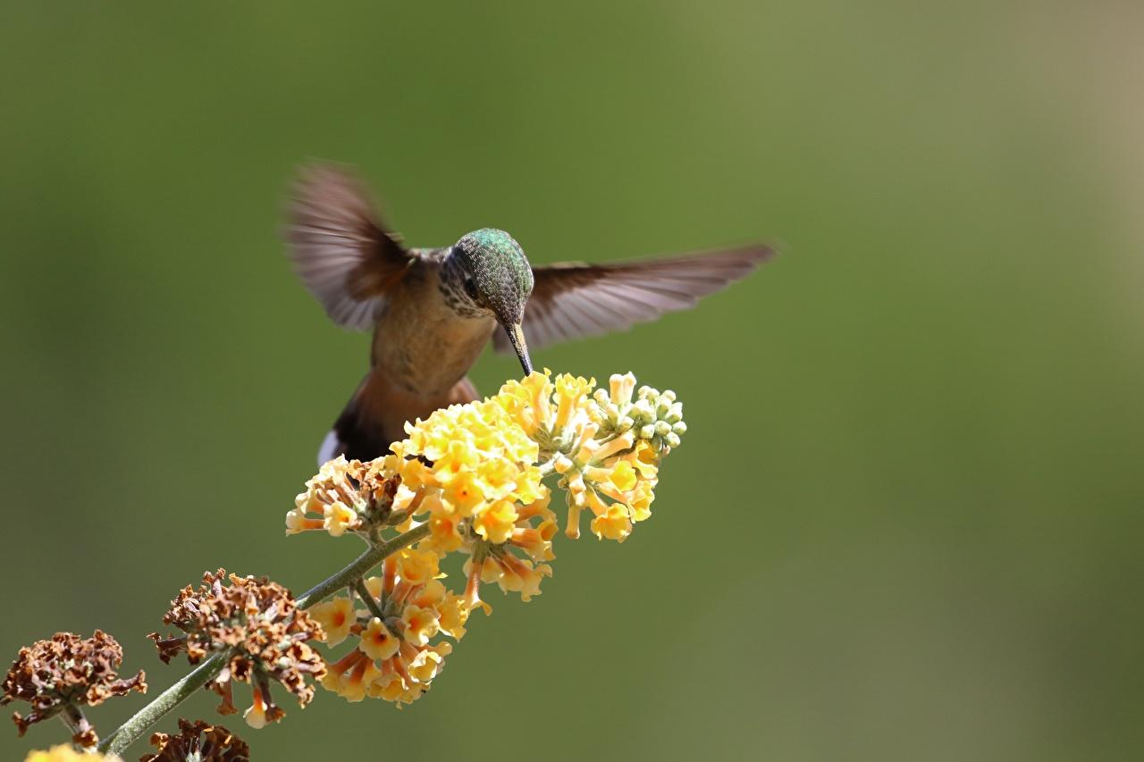 Photos bird Colibri blurred background Branches Animals Birds Hummingbird Bokeh animal