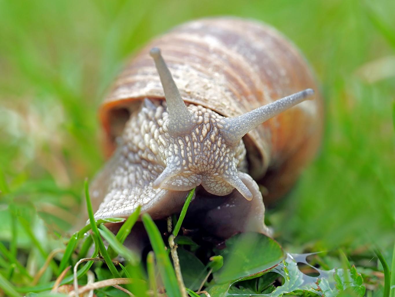 Fotos von Schnecken Bokeh ein Tier Großansicht unscharfer Hintergrund Tiere hautnah Nahaufnahme