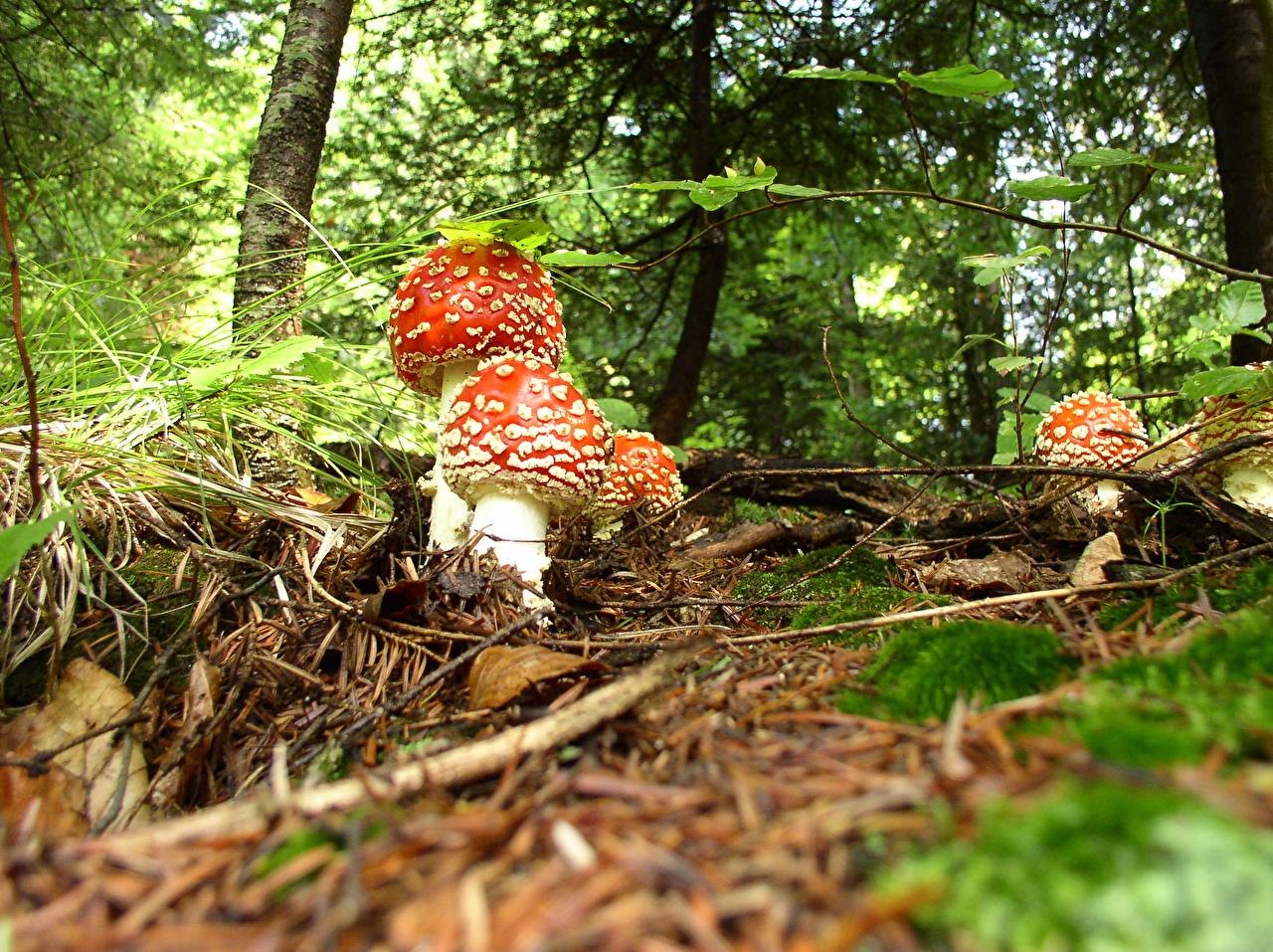 Photos Nature Mushrooms nature