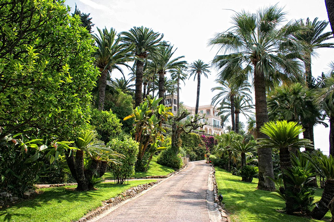 Photos France Menton Avenue Nature Parks palm trees Lawn Trees Allee park Palms