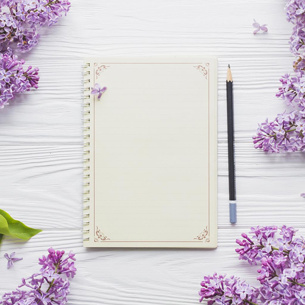 Bilder von Bleistift Blatt Papier Notizblock Blüte Flieder Vorlage Grußkarte Bretter bleistifte Blumen Syringa