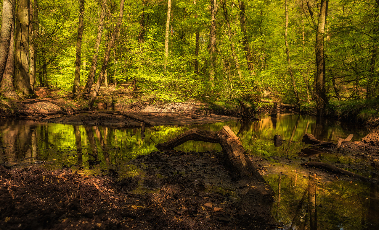 Fotos von Natur Wald Sumpf Baumstamm Wälder