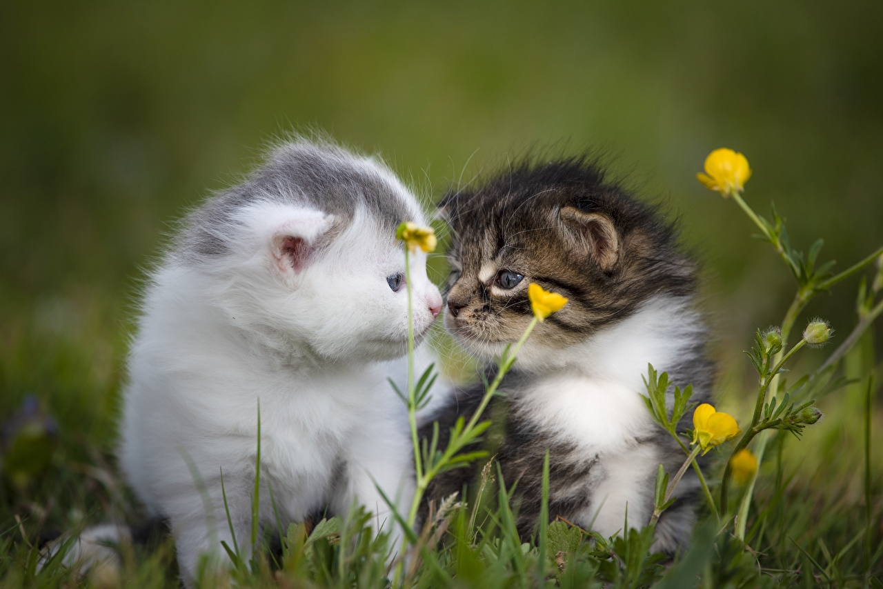 Wallpaper Kittens cat Bokeh pretty Two Grass animal kitty cat Cats blurred background Cute sweet lovely 2 Animals