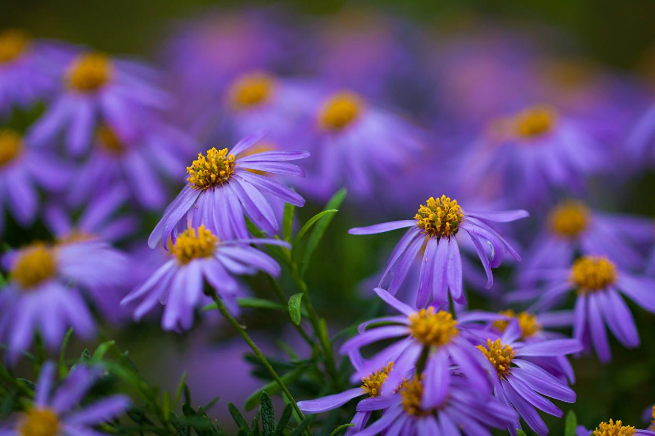 Foto Bokeh Violett Blumen unscharfer Hintergrund Blüte