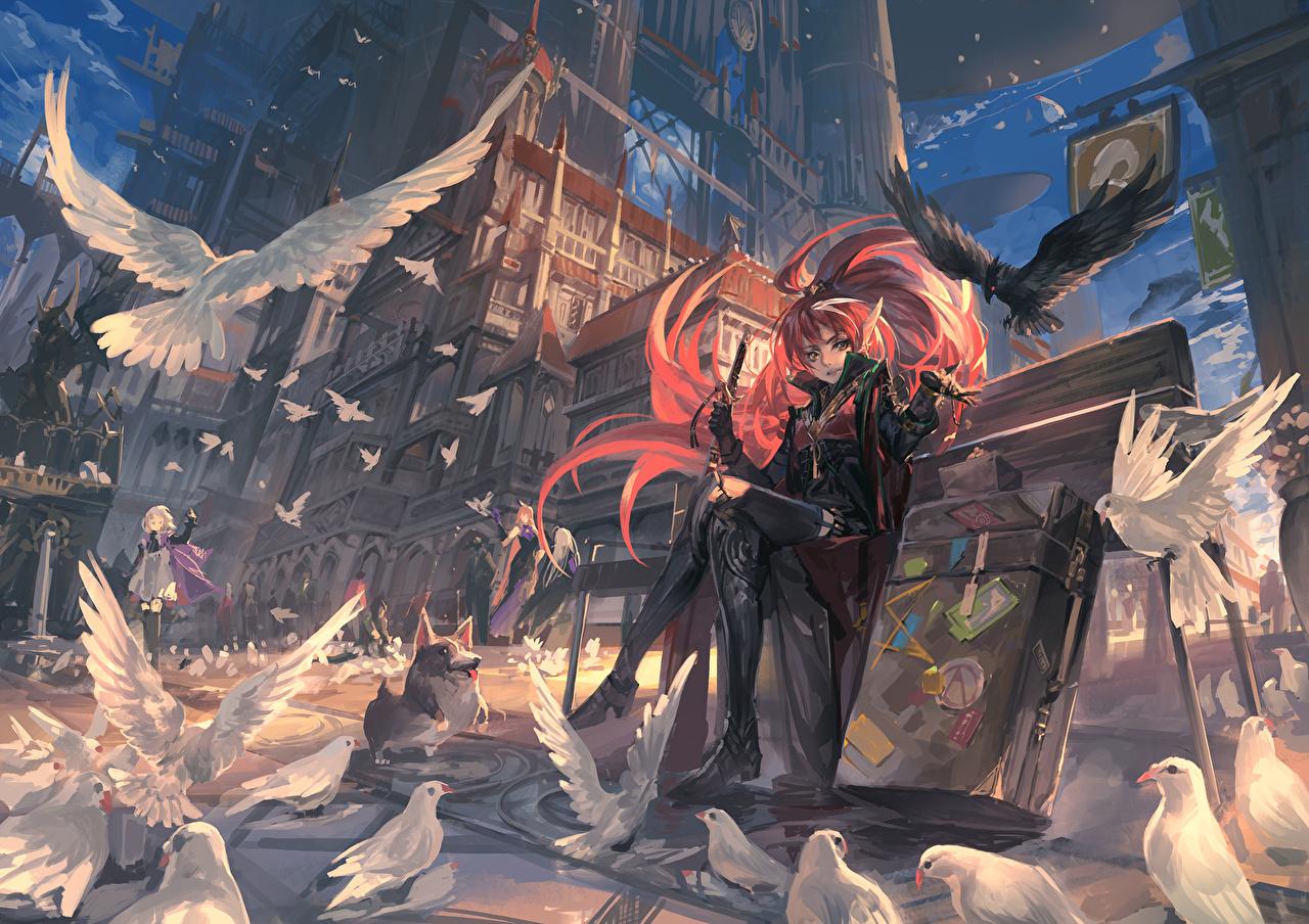 壁紙 鳥類 鳩 描かれた壁紙 Pixiv Fantasia Fallen Kings ストリート ベンチ アニメ 少女 ダウンロード 写真