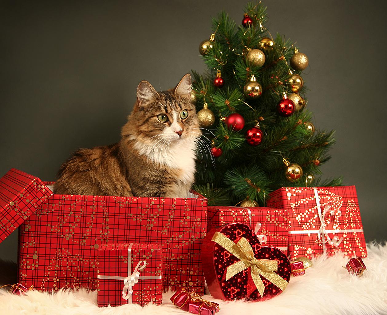 Image Cats Christmas New Year tree Box present Balls Bowknot Animals cat New year Christmas tree Gifts bow knot animal
