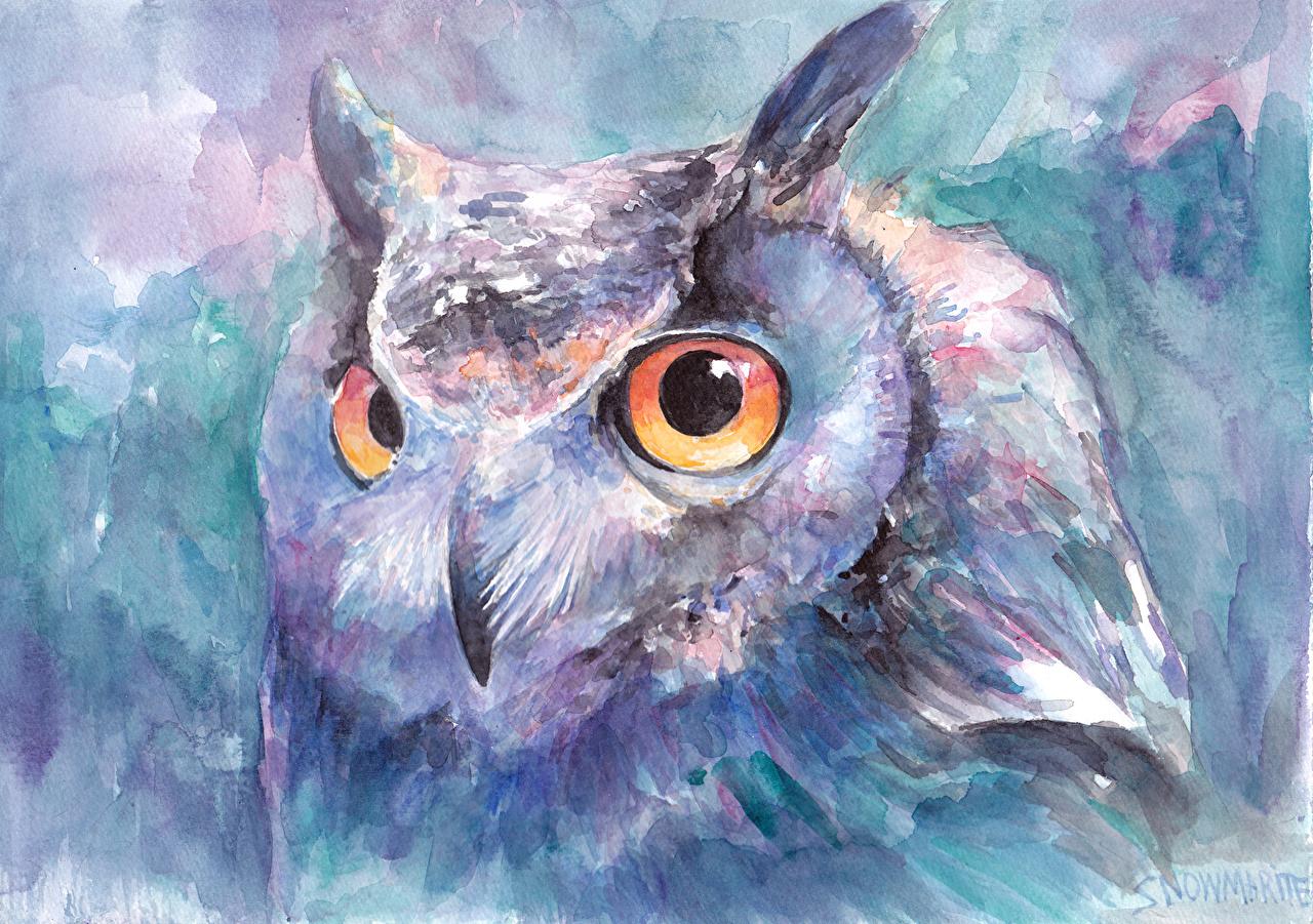 Image Owls Birds animal Painting Art owl bird Animals