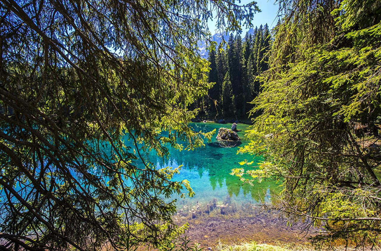 、イタリア、湖、Lake Carezza、枝、自然、