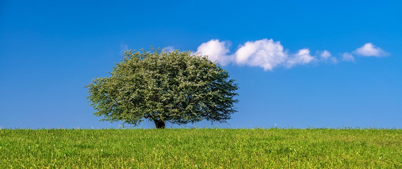 Desktop Wallpapers Nature Grass Sky Meadow Clouds Trees Panorama Grasslands panoramic