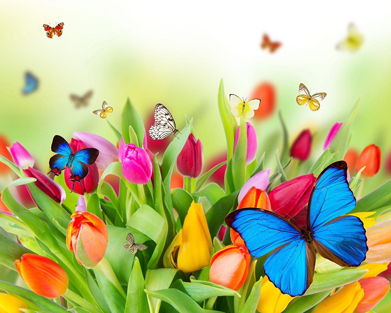 Fotografias De Mariposas Y Flores: Papeis De Parede Tulipas Lepidoptera Folhagem Flores
