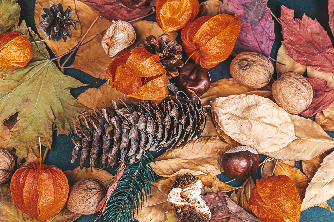 Desktop Wallpapers Chestnut Leaf Autumn Nature Conifer cone Nuts Foliage Pine cone