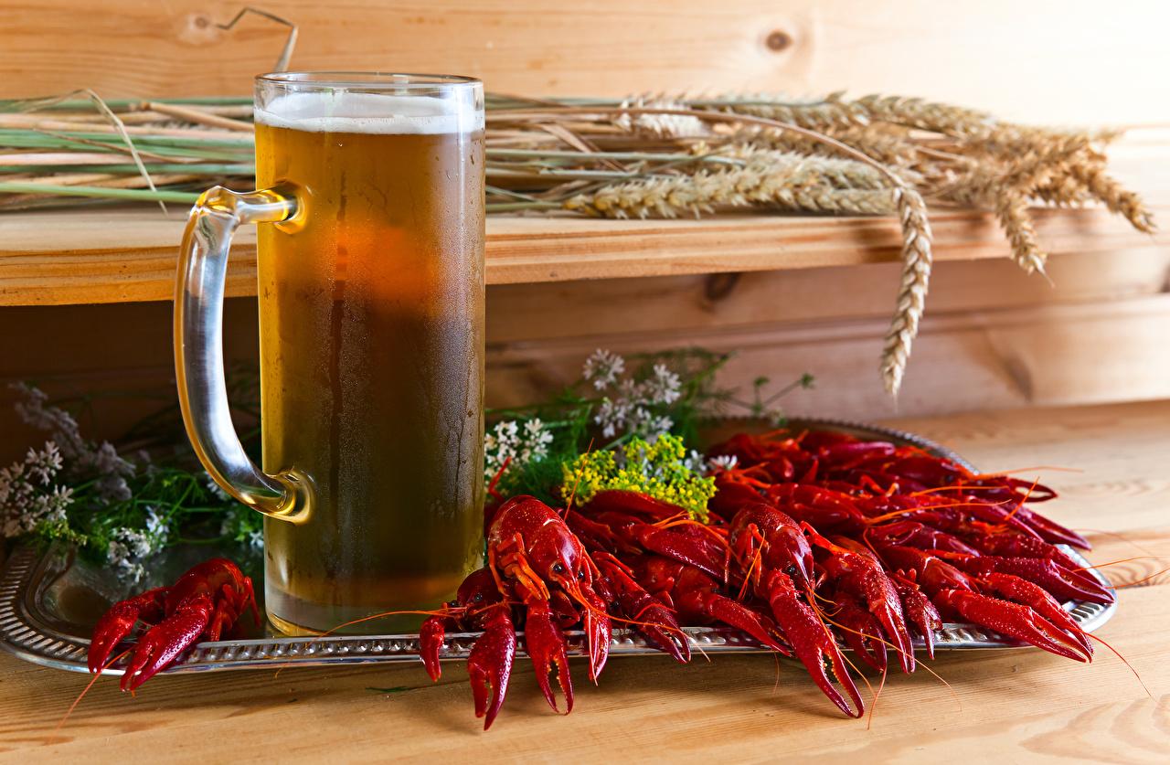 Fotos Bier Ähre Flusskrebs Becher Lebensmittel