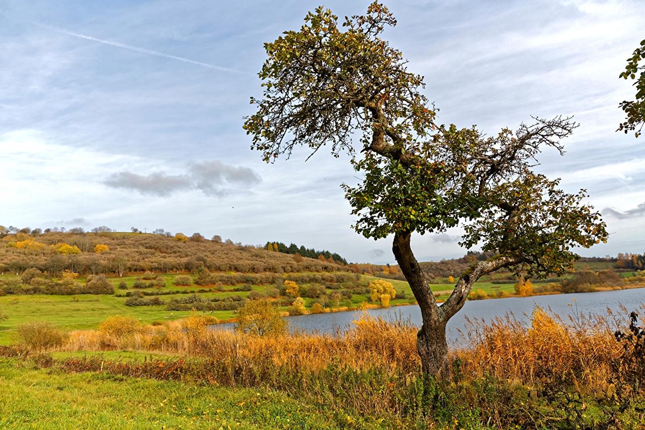 、ドイツ、風景写真、秋、湖、畑、Schalkenmehren、木、自然、