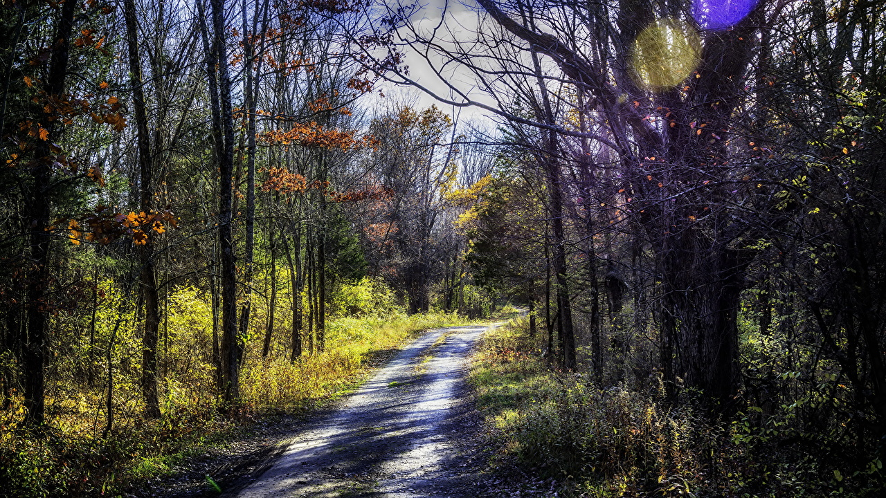 Image Autumn Nature Roads Forests Trees forest