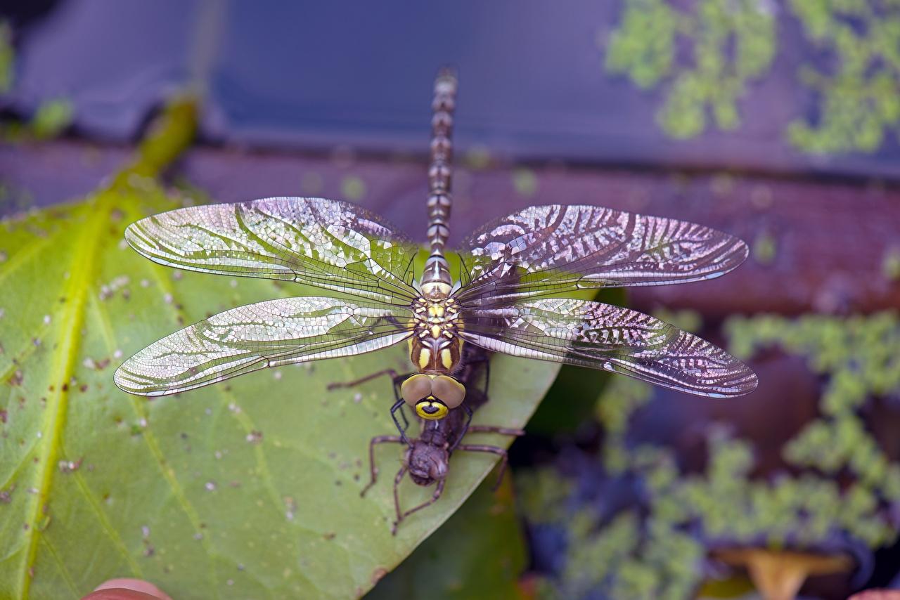 Fotos von Insekten Libellen Bokeh ein Tier Großansicht unscharfer Hintergrund Tiere hautnah Nahaufnahme