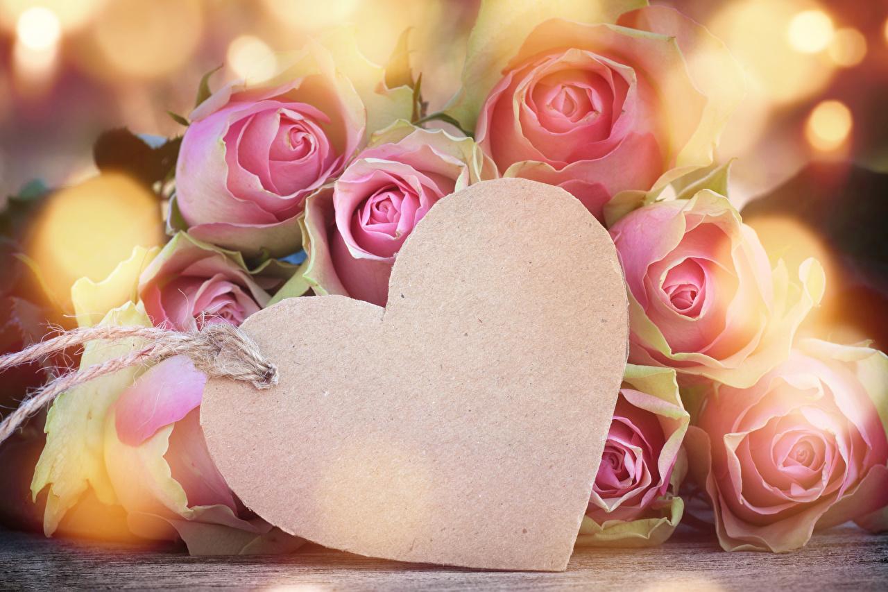 bilder valentinstag herz rosen rosa farbe blumen