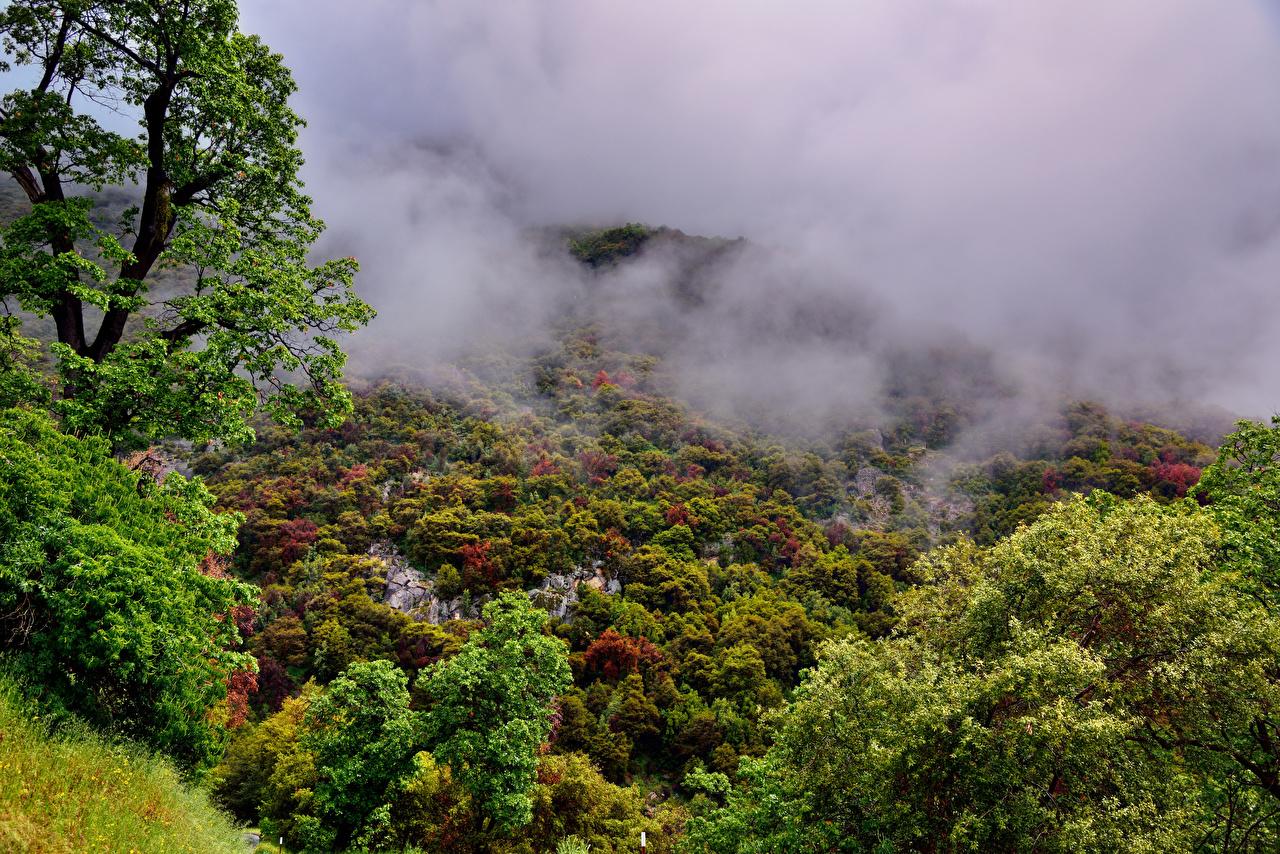 Hintergrundbilder Kalifornien USA Sequoia National Park Nebel Natur Wälder Bäume Vereinigte Staaten
