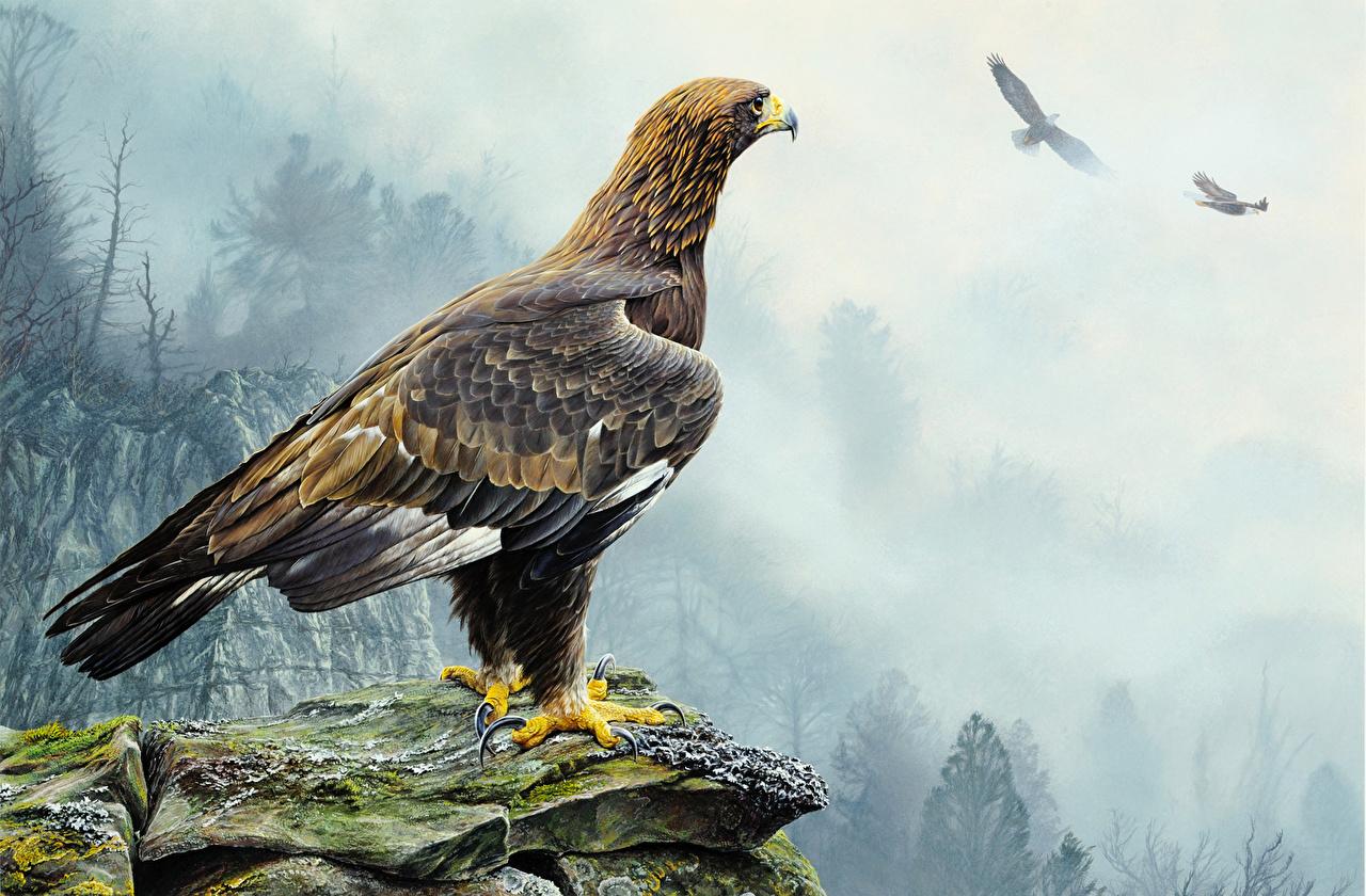 Pictures eagle Birds Alan M. Hunt Animals Painting Art bird Eagles animal