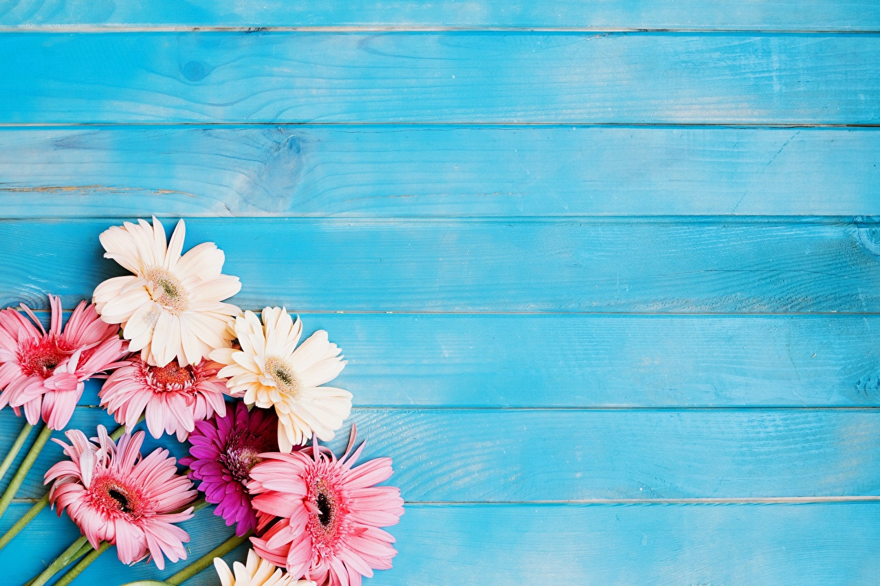 Photos Gerberas Flowers Template greeting card Wood planks gerbera flower boards
