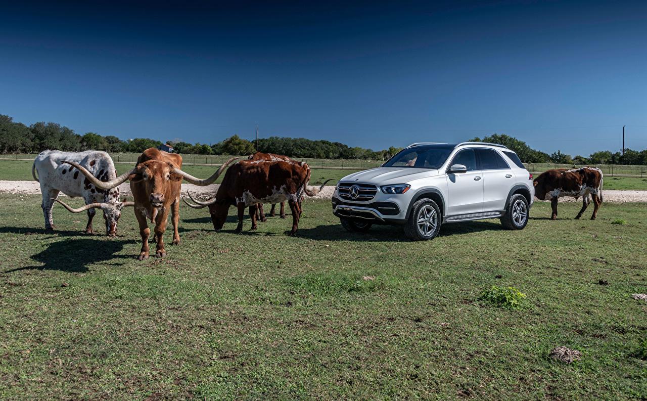 Mercedes-Benz_Bulls_2019_GLE_450_4MATIC_Silver_559277_1280x793.jpg