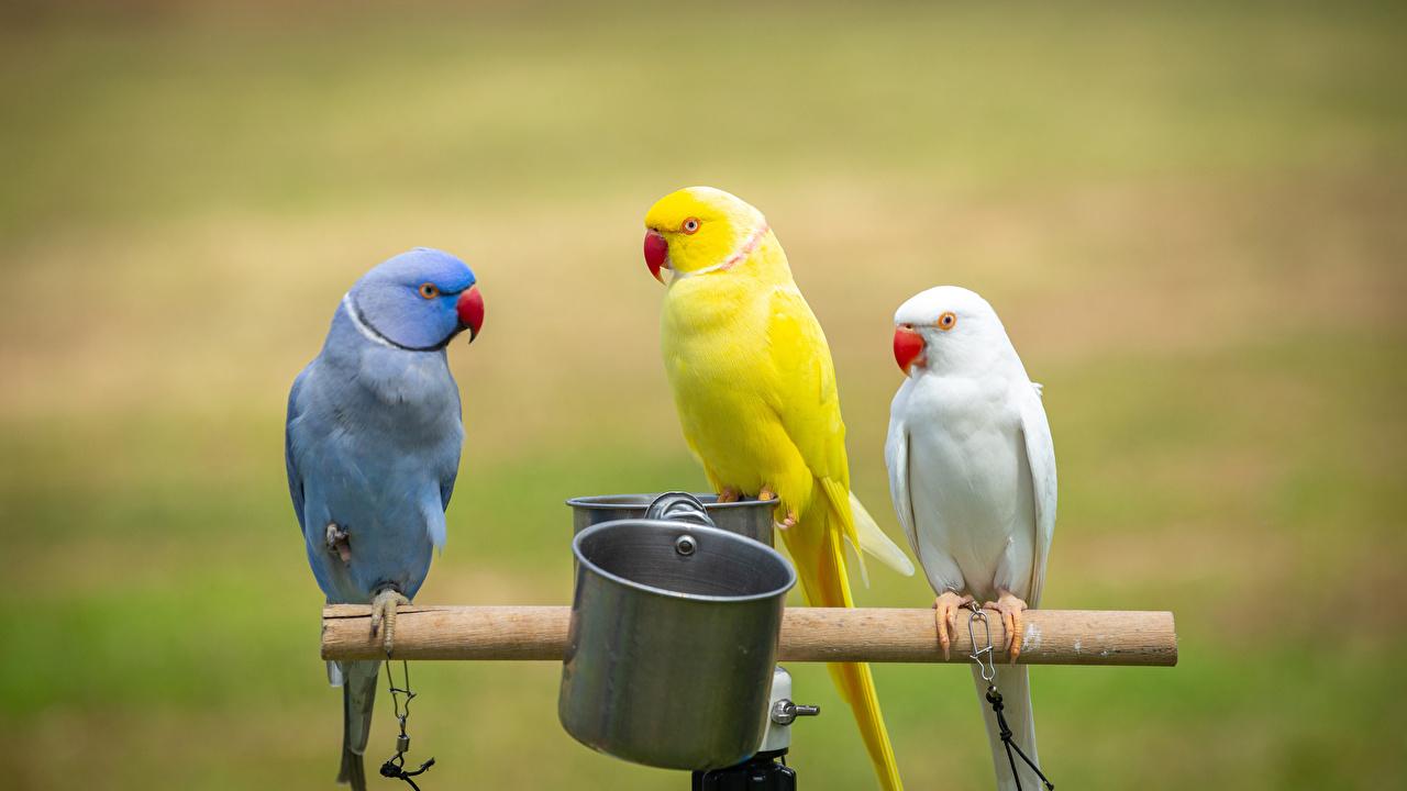 Photos bird parrot blurred background Three 3 Animals Birds Parrots Bokeh animal