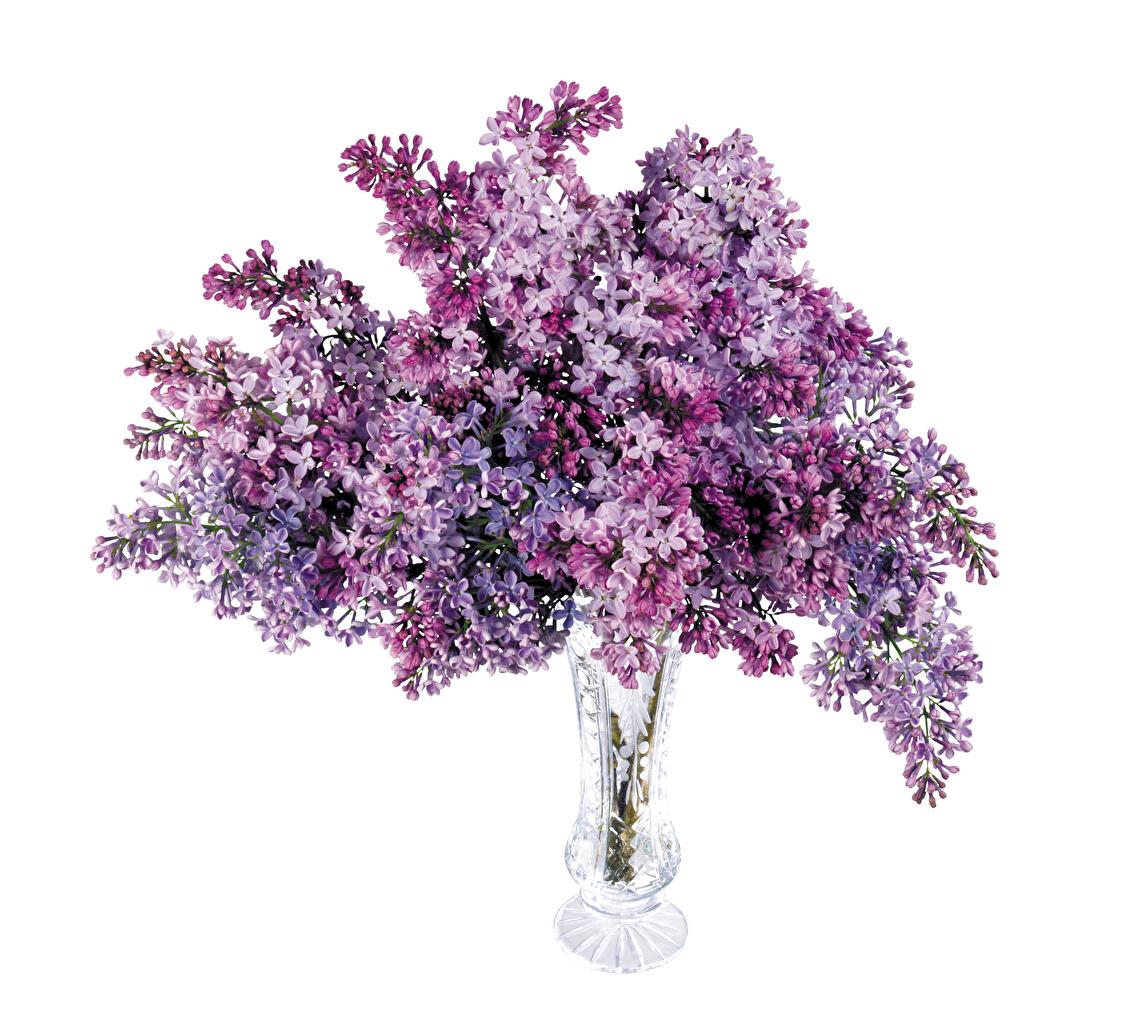 Hintergrundbilder Sträuße Blumen Flieder Vase Weißer hintergrund Syringa