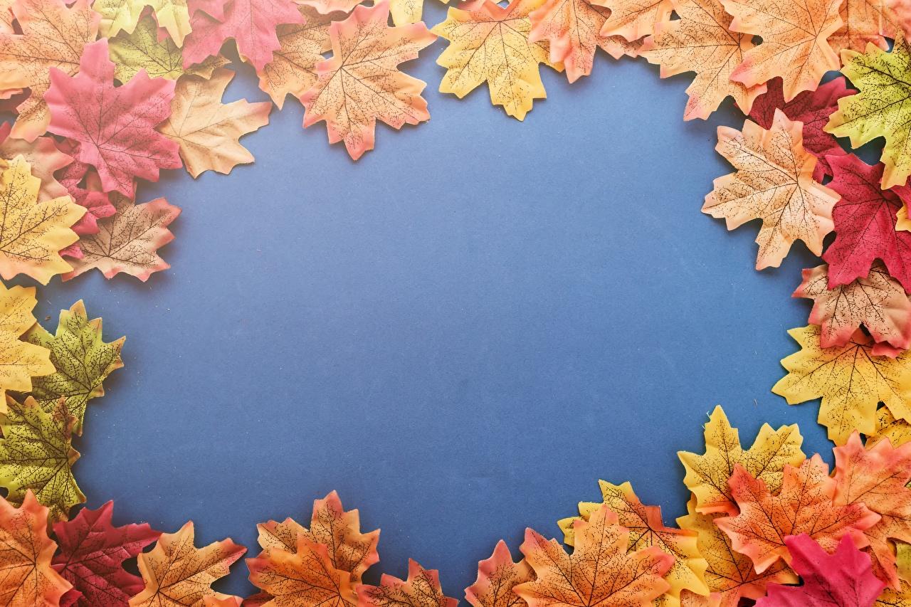 Photo Foliage acer Nature Template greeting card Leaf Maple