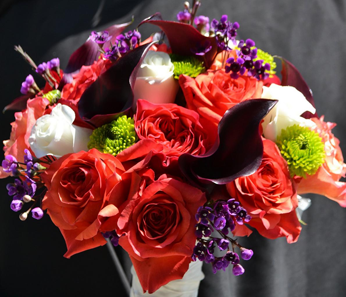 Foto Sträuße Rose Calla palustris Blumen Blumensträuße Rosen Drachenwurz Blüte