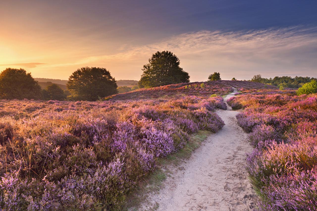 Fotos von Niederlande Weg Natur Felder Lavendel Sonnenaufgänge und Sonnenuntergänge Acker Morgendämmerung und Sonnenuntergang