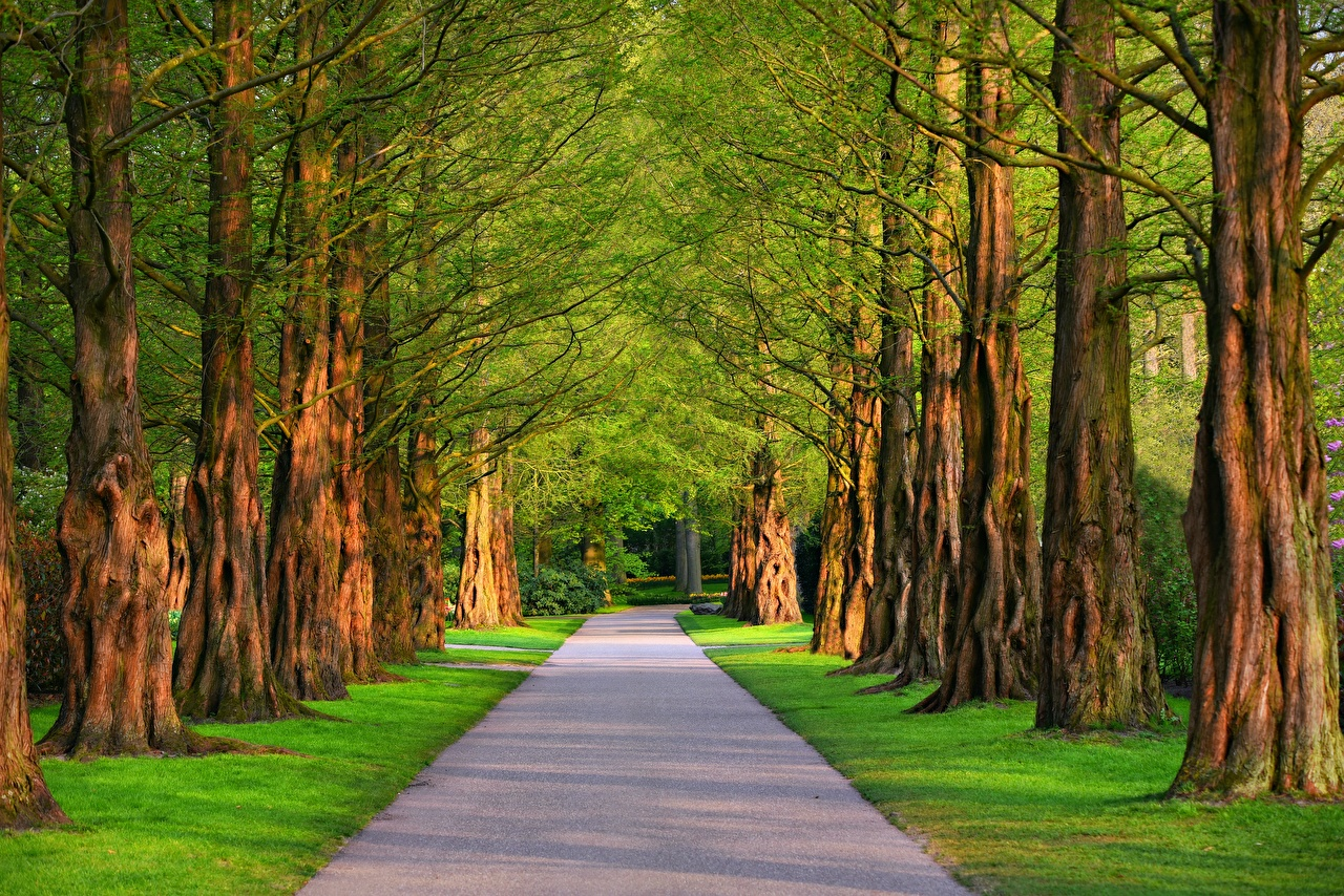 Images Nature Avenue Summer Roads Grass Trees Allee