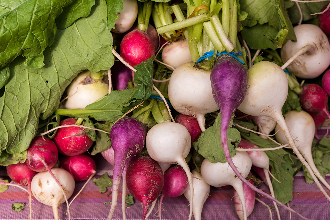 Photo Radishes Food Vegetables Many