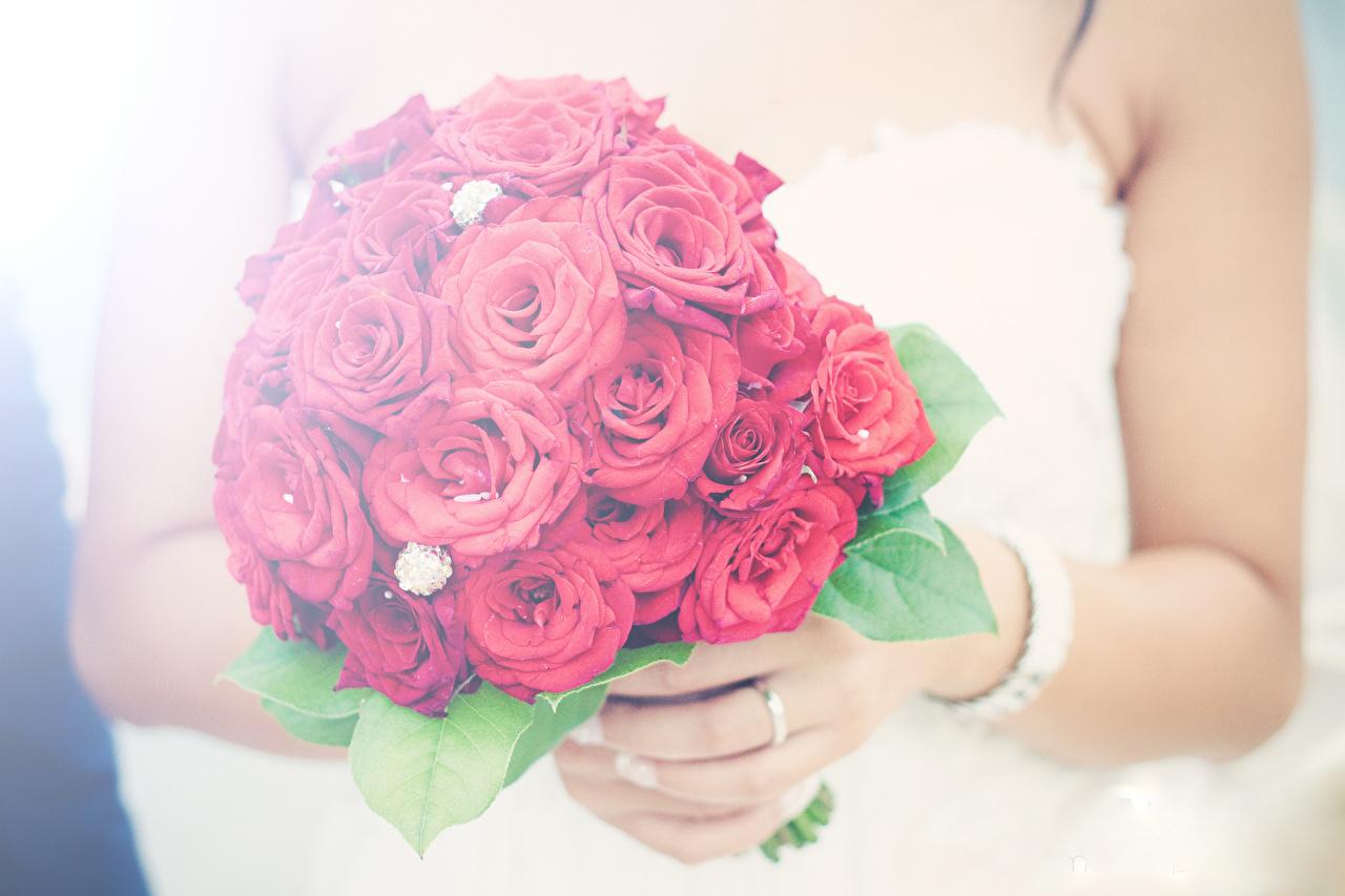 Photos Wedding Bouquet Red Rose Flowers