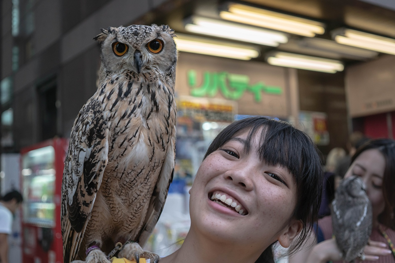 Photo Owls Brunette girl Smile Girls Asiatic Head Glance animal owl female young woman Asian Staring Animals