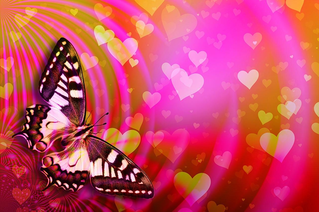 Desktop Hintergrundbilder Valentinstag Schmetterling Herz Papilio machaon ein Tier Schmetterlinge Tiere
