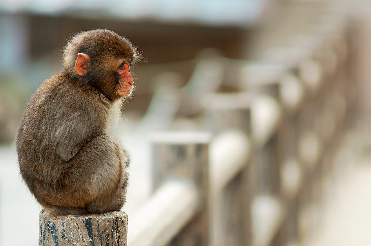 Wallpaper Monkey Animal Images, Photos, Reviews