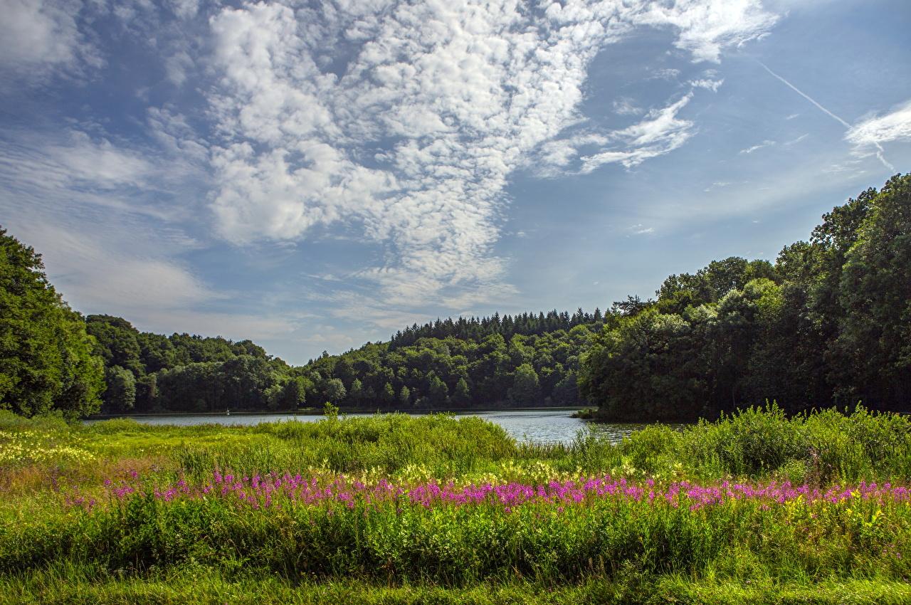 、ドイツ、風景写真、川、空、Saxler、草、自然、