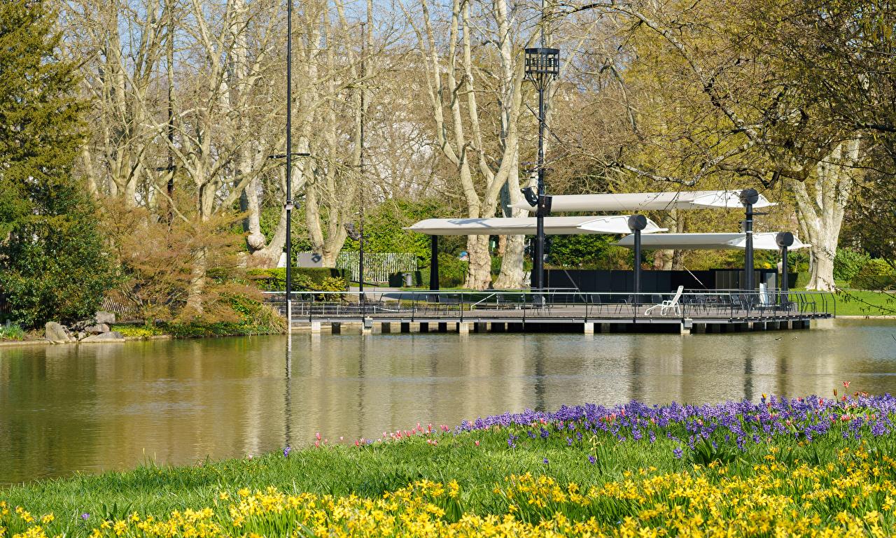 Desktop Wallpapers Germany Karlsruhe Spring Nature park Pond Daffodils Hyacinths Parks Narcissus