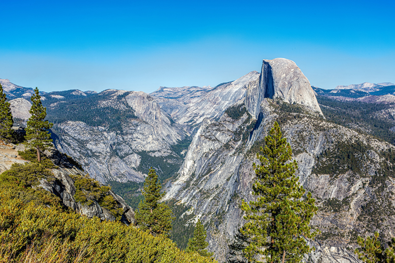 Images Yosemite California USA Nature Spruce mountain Parks Moss Mountains park