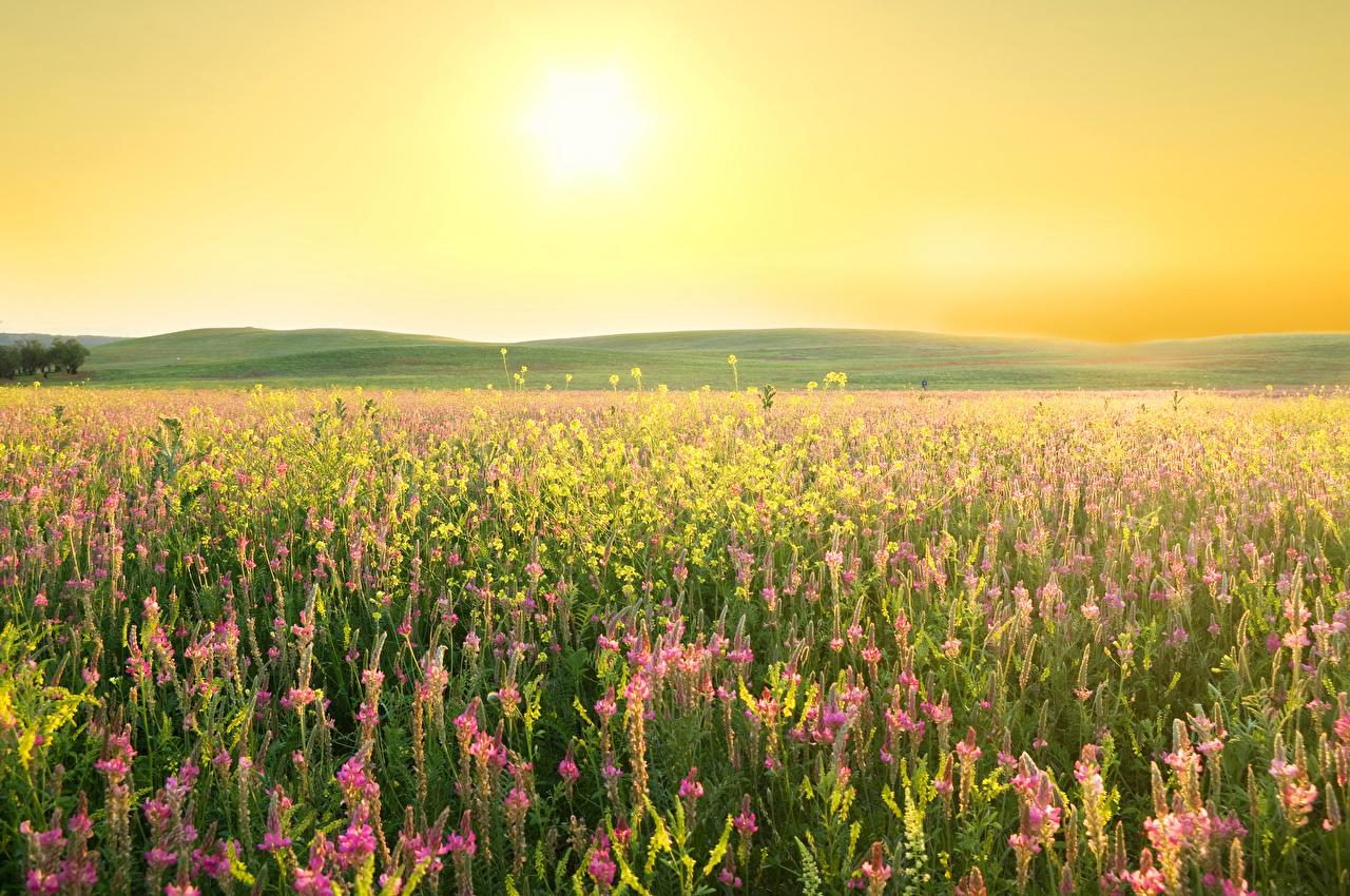 Fotos Natur Sonne Felder Lupinen Lavendel Acker