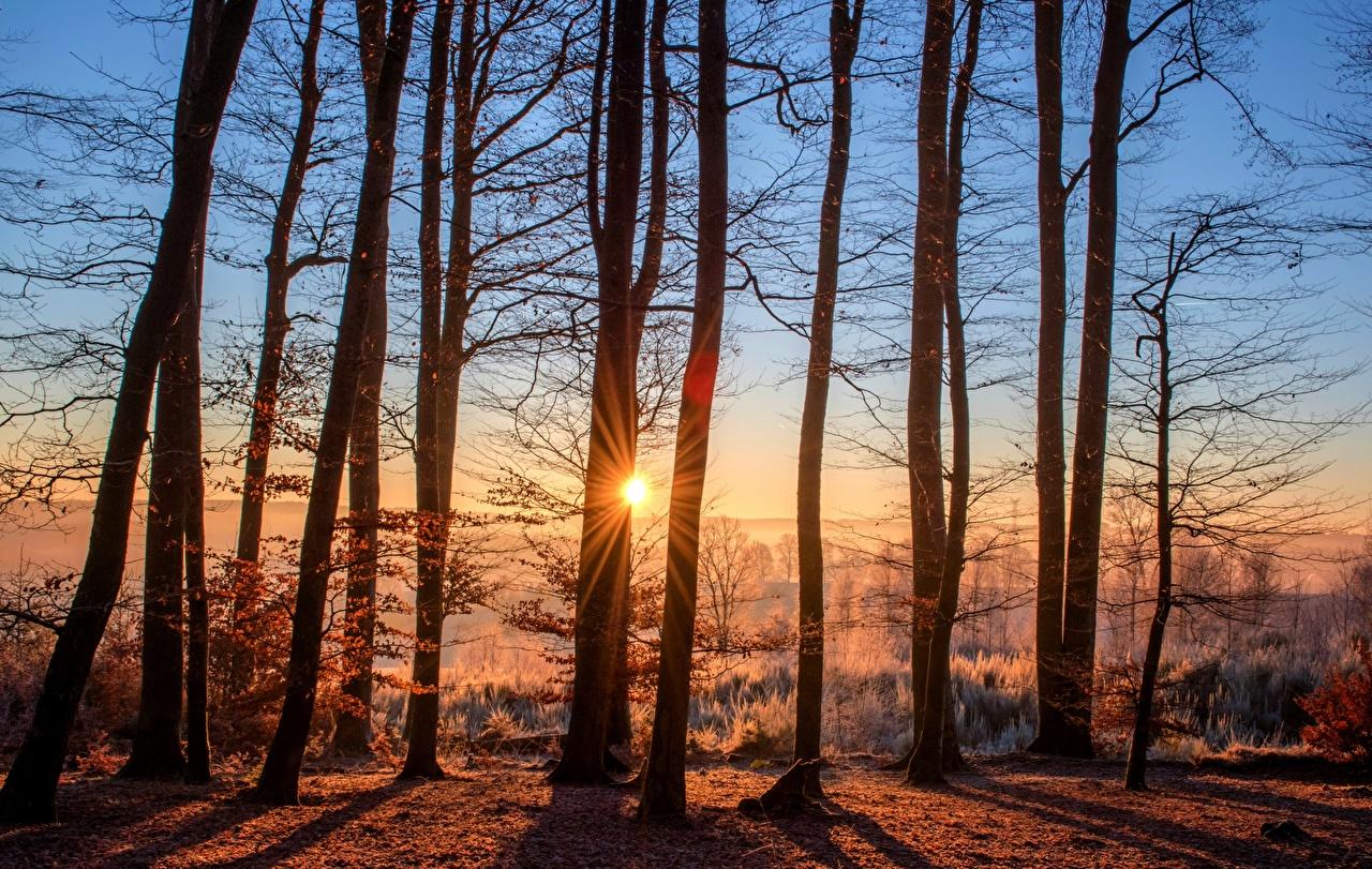 Fotos von Lichtstrahl Natur Sonne Herbst Wald Morgendämmerung und Sonnenuntergang Bäume Wälder Sonnenaufgänge und Sonnenuntergänge
