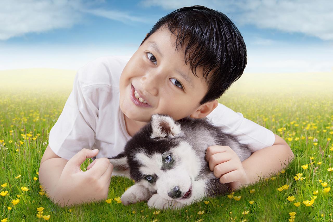 Bilder Welpe Siberian Husky Hunde Junge Kinder Tiere Starren welpen hund jungen kind Blick ein Tier
