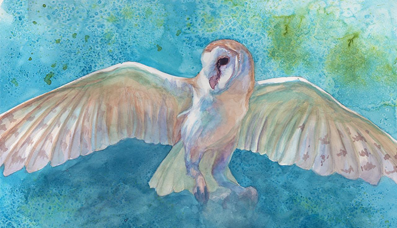 Immagine aves Gufo Ali di uccello Pittura animale gufi uccello Uccelli Animali