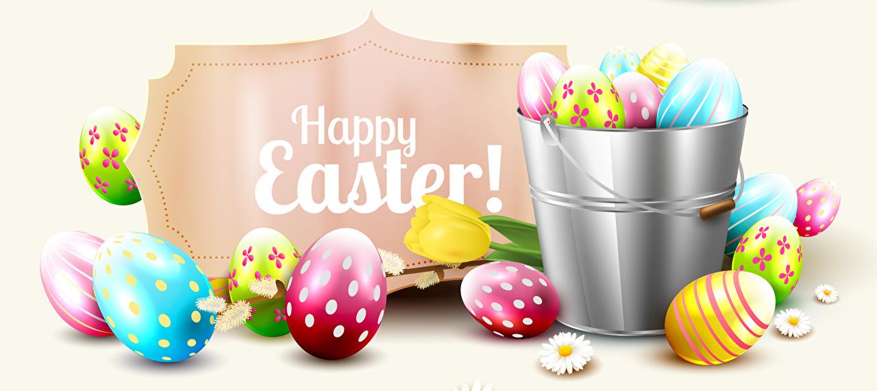 Photos Easter English Eggs Bucket White background Design egg